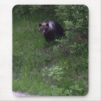 Cojín del oso tapete de ratones