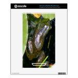 Cojines de la rana y de lirio skins para NOOK color
