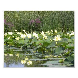 Cojines de lirio en la floración arte fotográfico