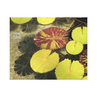 Cojines de lirio impresión en lienzo