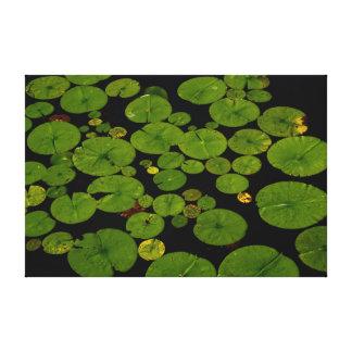 Cojines de lirio verdes claros impresiones en lona estiradas