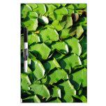 cojines de lirio verdes sólidos tableros blancos