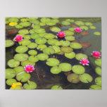 Cojines de lirio y flores de Lotus Impresiones