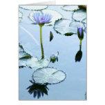 Cojines de lirio y tarjeta de Lotus