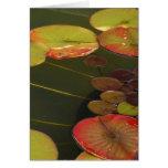 Cojines verdes y rojos de Lilly Tarjeton