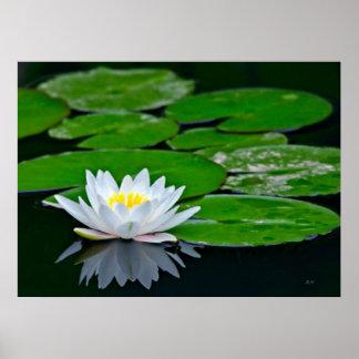Cojines y Lotus de lirio Póster