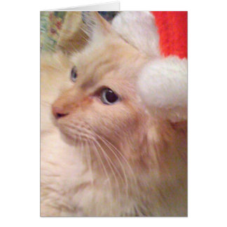 Cokie Cat Sm Christmas Cards