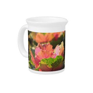 Col rosada verde Sunglight vegetal ornamental Jarra De Beber