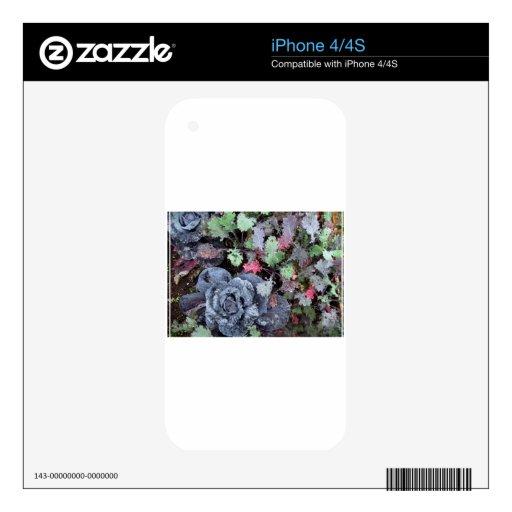 Col y col rizada - fotografía calcomanías para el iPhone 4S