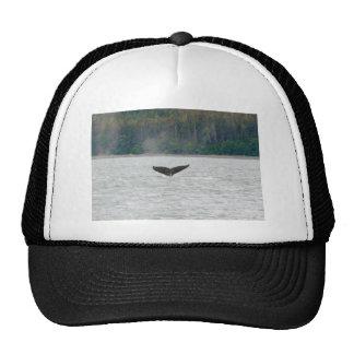 Cola de la ballena de Alaska Gorras