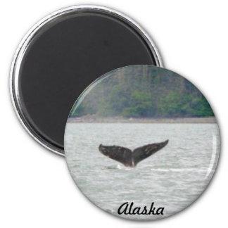 Cola de la ballena de Alaska Imán Redondo 5 Cm