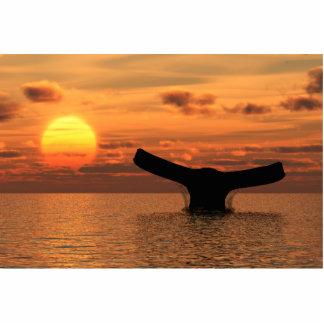 Cola de la ballena en la puesta del sol escultura fotográfica