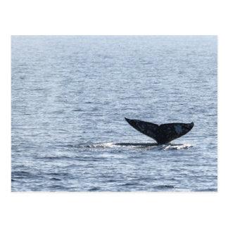 Cola de la ballena gris tarjeta postal