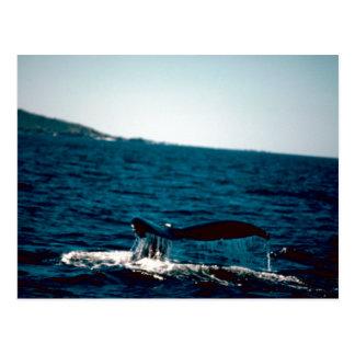 Cola de la ballena jorobada, foto por Gary M Postales
