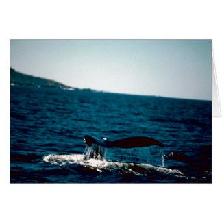Cola de la ballena jorobada, foto por Gary M Stolz Tarjeton
