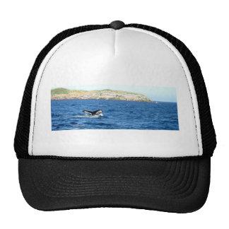 Cola de la ballena jorobada gorras