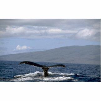 Cola de la ballena jorobada, Hawaii Esculturas Fotográficas