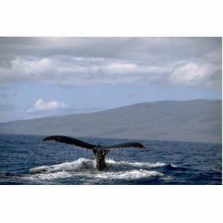 Cola de la ballena jorobada, Hawaii Fotoescultura Vertical