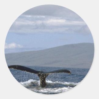 Cola de la ballena jorobada, Hawaii Etiqueta
