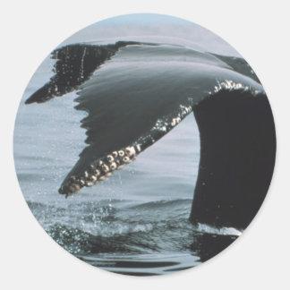 Cola de la ballena jorobada pegatina redonda