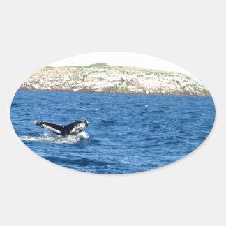 Cola de la ballena jorobada calcomania de óval