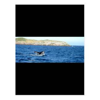 Cola de la ballena jorobada postal