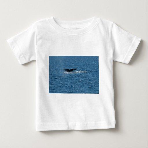 cola de la ballena playera