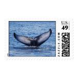 Cola de la ballena sellos