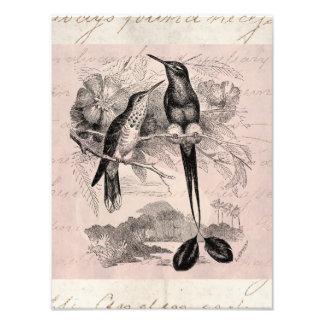 Cola de la estafa del colibrí de la Estafa-Cola de Fotografia