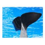 Cola de las postales de una ballena