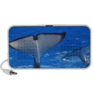 Cola de los altavoces portátiles de una ballena
