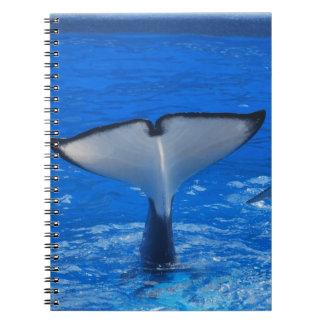Cola de un cuaderno de la ballena