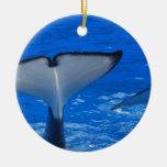 Cola de un ornamento de la ballena ornato