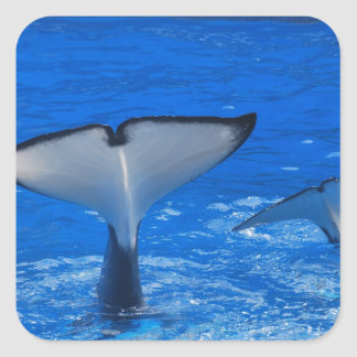 Cola de un pegatina de la ballena