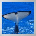 Cola de un poster de la ballena
