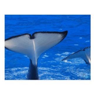 Cola de una postal de la ballena