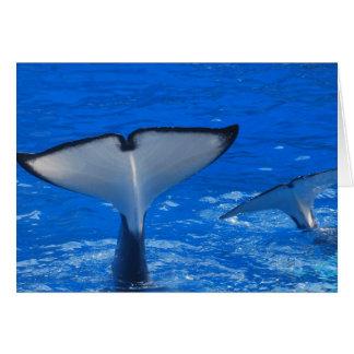 Cola de una tarjeta de felicitación de la ballena