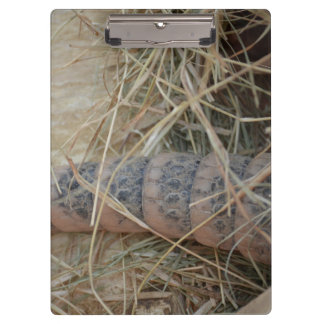cola del armadillo en imagen del animal del heno
