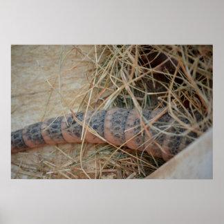 cola del armadillo en imagen del animal del heno póster