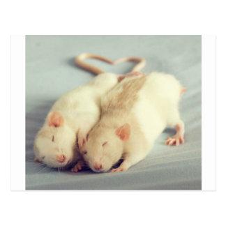 Cola del corazón de las ratas tarjeta postal