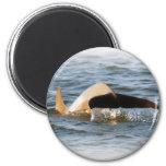 Cola del delfín imanes de nevera