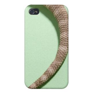 Cola del dragón barbudo iPhone 4/4S funda