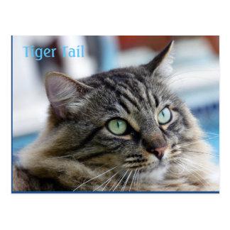 ¡Cola del tigre el gato mullido! Postal