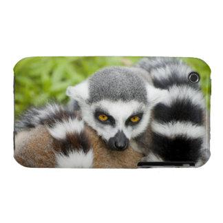 Cola linda de Stripey del Lemur iPhone 3 Case-Mate Cárcasa