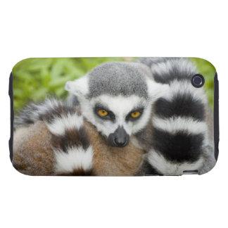 Cola linda de Stripey del Lemur iPhone 3 Tough Cobertura