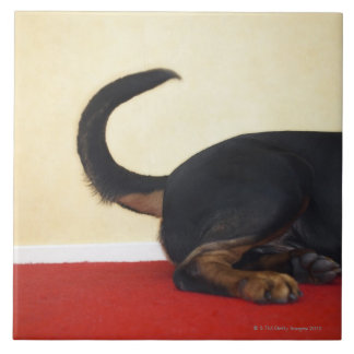 Cola que menea de Rottweiler, sección trasera Azulejo Cuadrado Grande