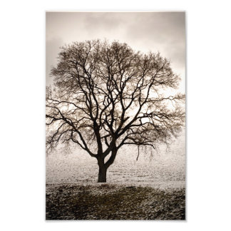 cold and lovely photo print