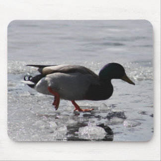 Cold Duck Mouse Pad
