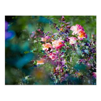 Cold Flowers Postcard