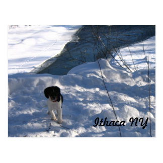Cold Puppy Postcard